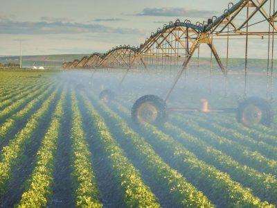 Экспорт продукции нижегородского агропрома за полгода превысил 120 млн долларов