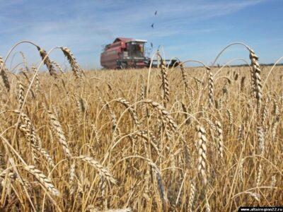 В хозяйствах Павловского и других районов Нижегородской области завершается уборка зерновых