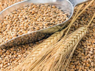 Урожай в Нижегородской области будет больше прошлогоднего
