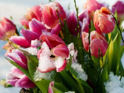 Поздравление губернатора Нижегородской области Глеба НИКИТИНА с 8 марта